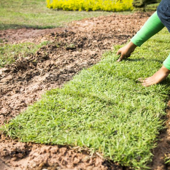 lawn_planting_laying_sod_turf_shutterstock_167542091