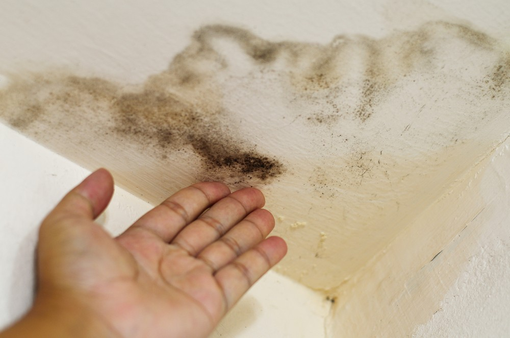 mold, sick house, leak, cost to repair