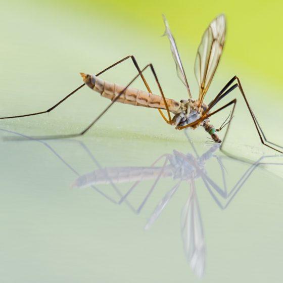mosquito-1754359