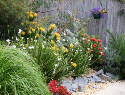 native_plants_native_flowers_native_garden_native_landscaping_yard_backyard_landscape_shutterstock_163756475