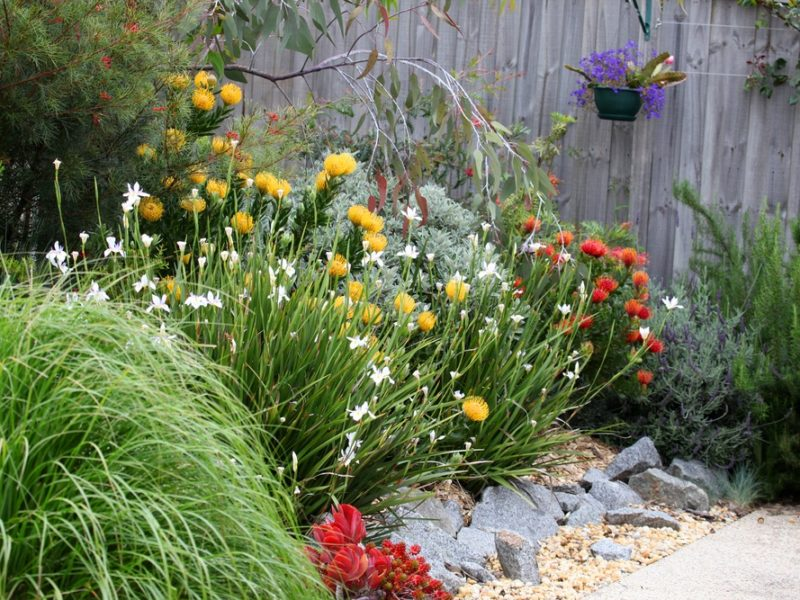 gardens, gardening