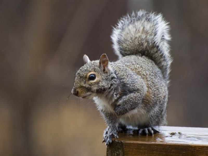 keep squirrels out of birdhouses
