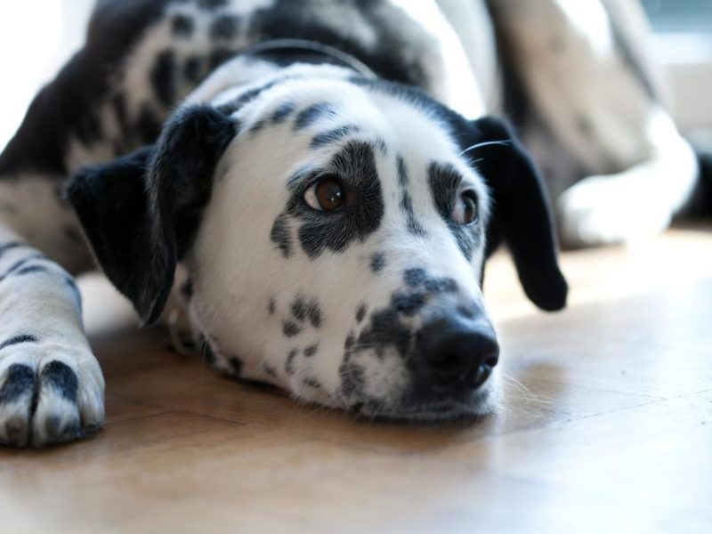 floors, winter pet safety, pet safety