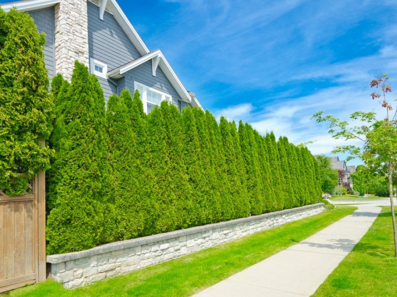 xeriscaping, trees, sound barrier, noise blocking