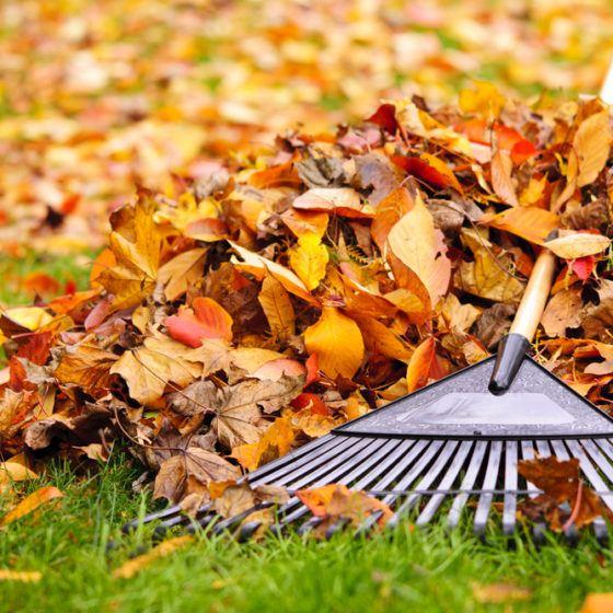 rake_raking_fall_autumn_leaves_leaf_pile_shutterstock_118900342