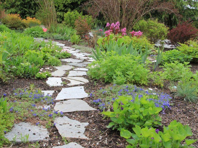 weeds, gardening, weeds show gardening sucess
