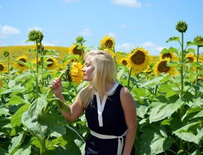 sunflowers-1572369_1920