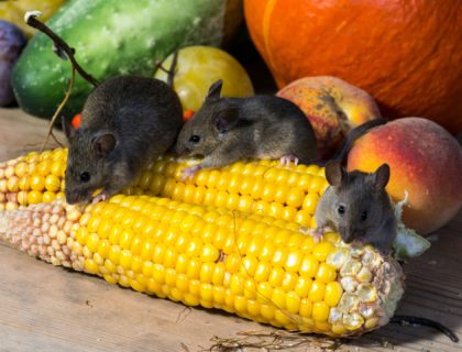 vegetables-mice-928977_1920