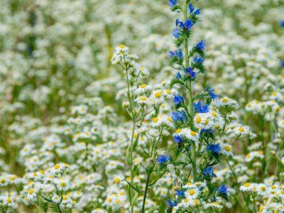 spring flowers, meadow