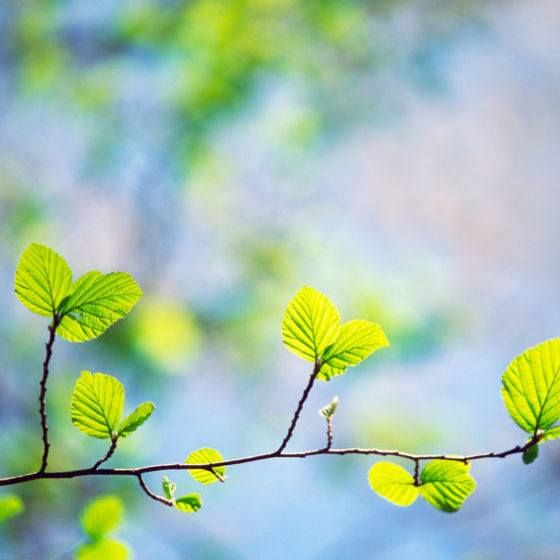 spring_season_tree_leaves_green