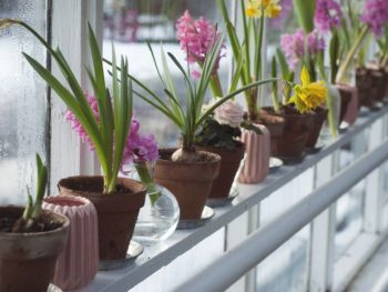 greenhouse, flowers