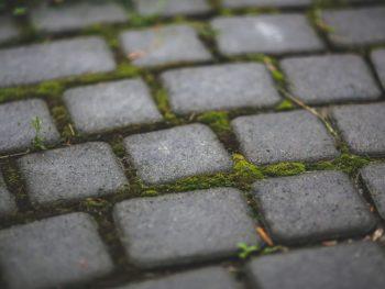 moss, patio, paver