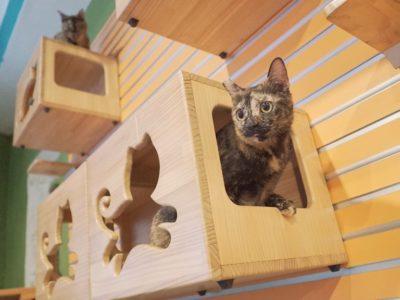 catwalk shelf