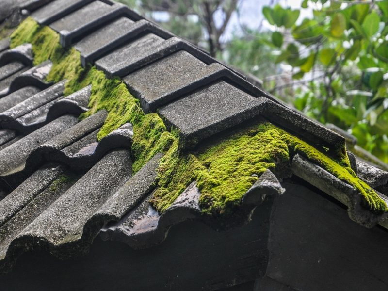 eliminate moss