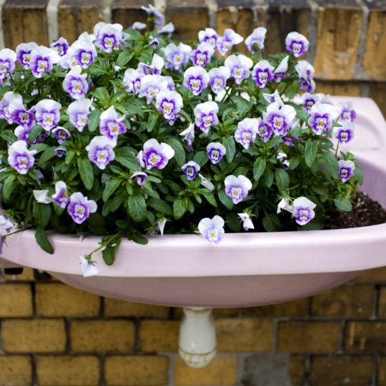 Urban Gardening Garden Flower Viola Wash Bowl Sink Street Art Bio Organic Love Wall Wallpaper Plastering Ground Background Rough Brick Mason Layer Violet Pink Beige Green Nature