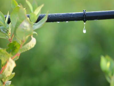 xeriscape, drip irrigation, fall garden