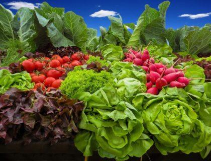 Fresh Vegetables from Garden