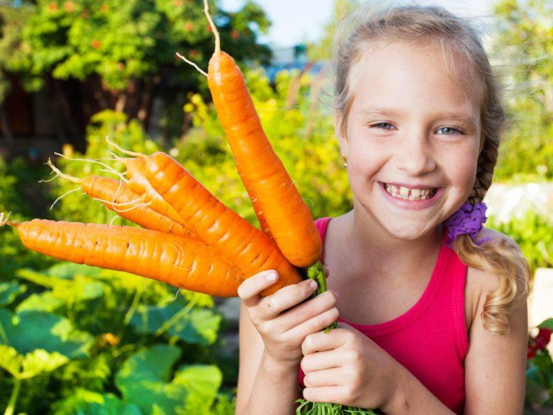 children's garden, harvest vegetables, fall vegetable garden