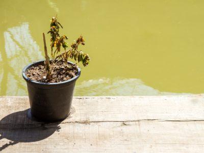 common houseplants