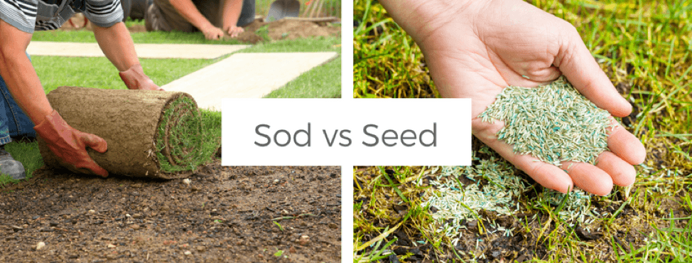 outdoor projects, sod. vs. seed