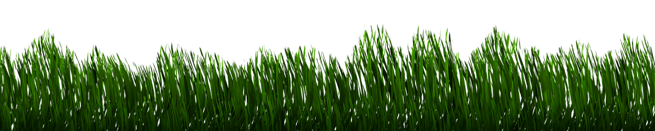 Section of grass