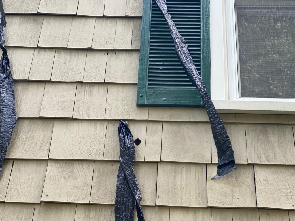 Plastic strips attached to siding keep woodpeckers away
