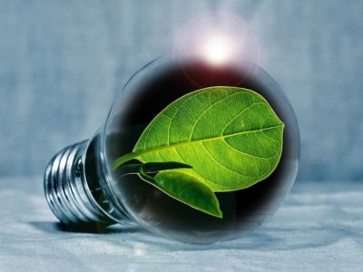 Green leaf inside a light bulb