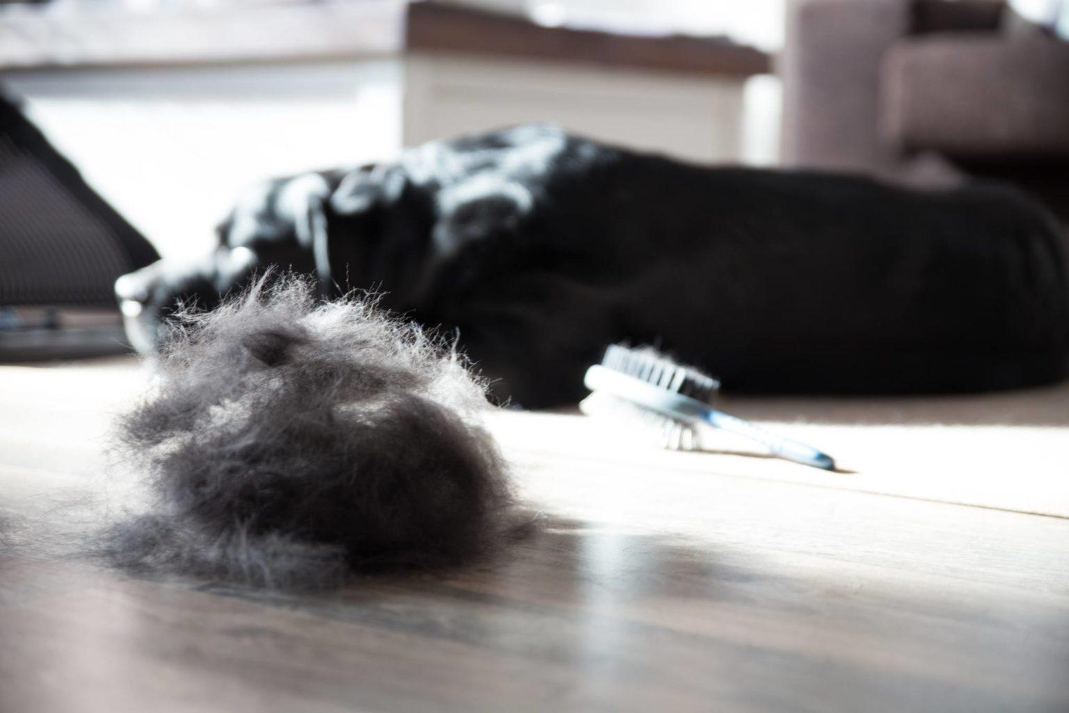 clean, pet-friendly home