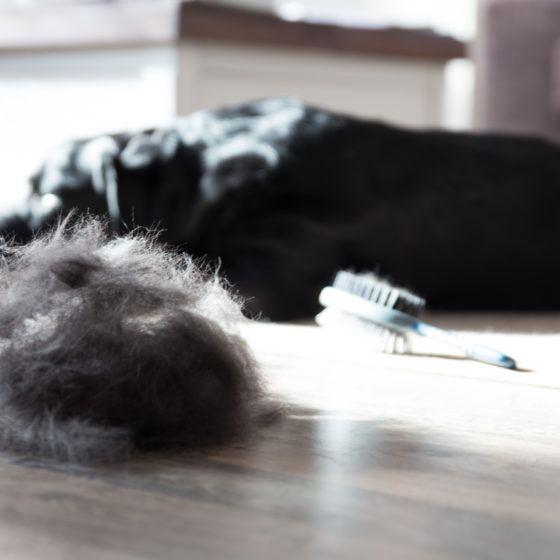 Brushed Dog