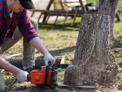 Man cuts the stump with a chainsaw
