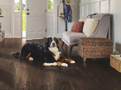pet friendly floor, pet proof home, dog proof home