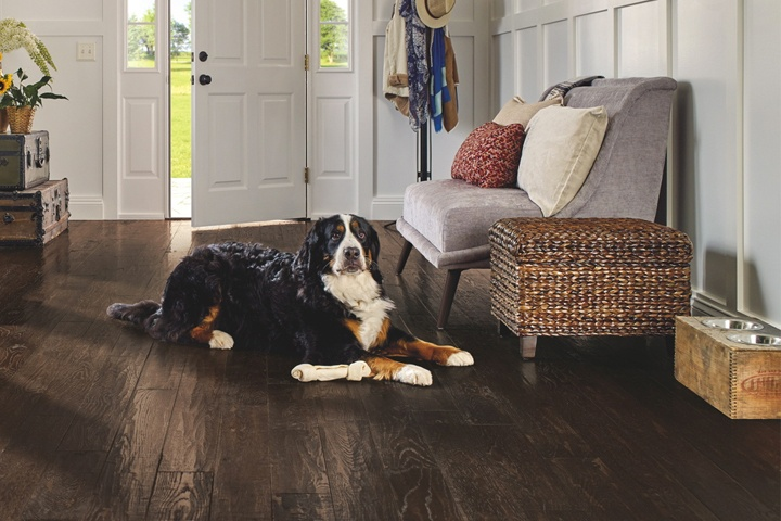 Best Pet Friendly Floors 7 Surfaces That Stand Up The