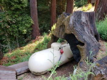 Propane tank under giant tree stump