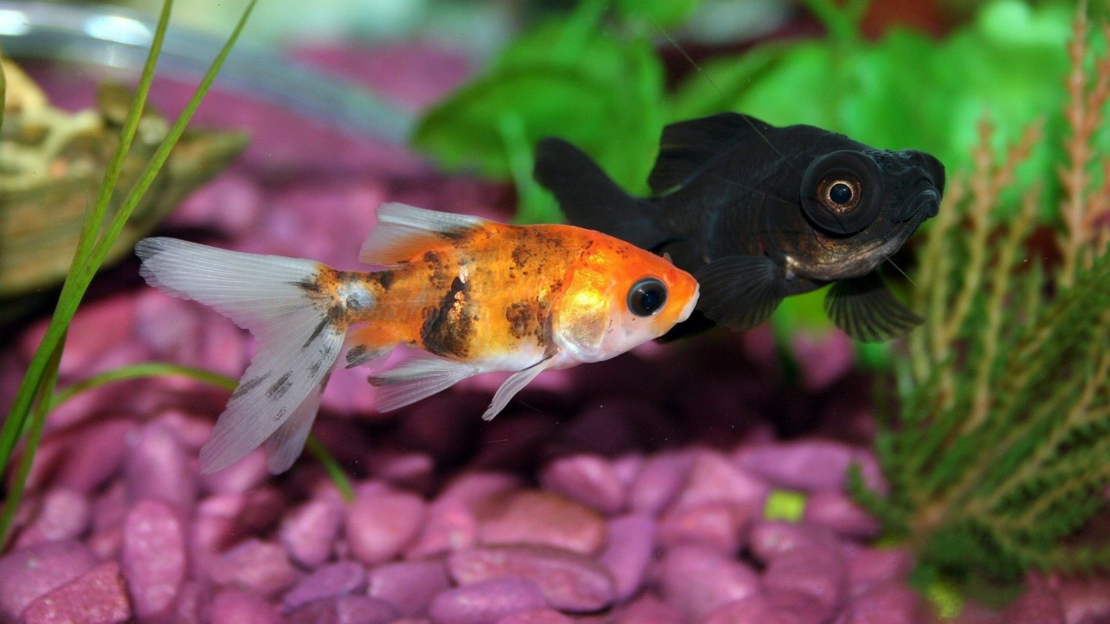 Cost to Keep Freshwater Fish