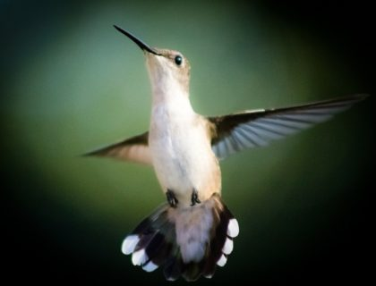 bird-246114_1920