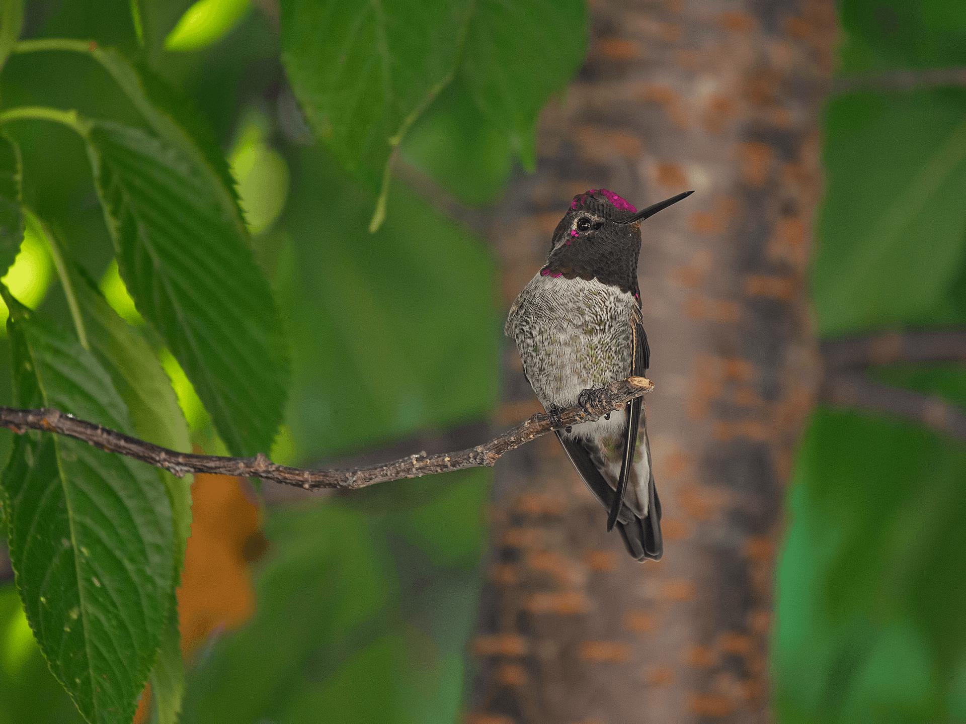 Hummingbird nesting near tree