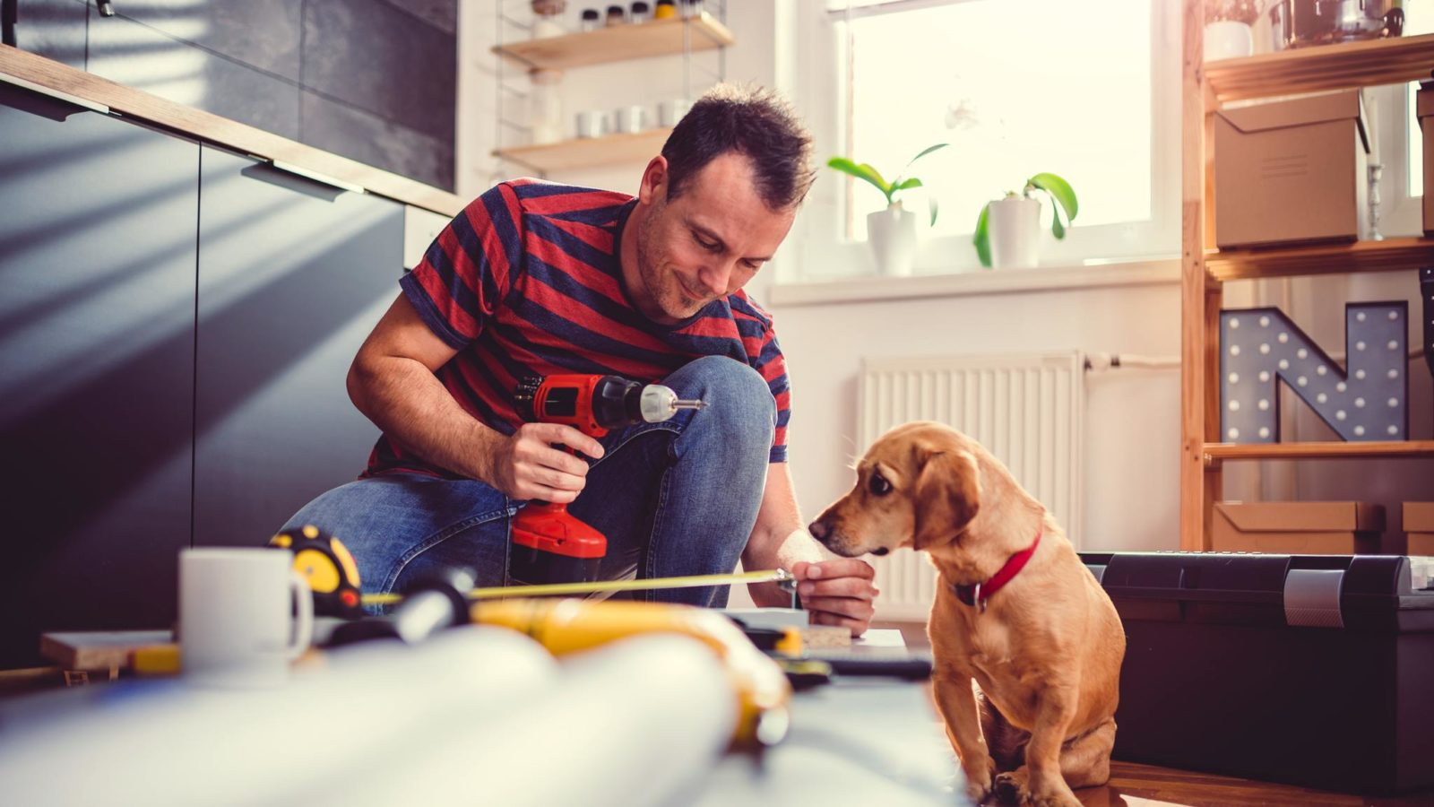 Man with small yellow dog working on a new kitchen