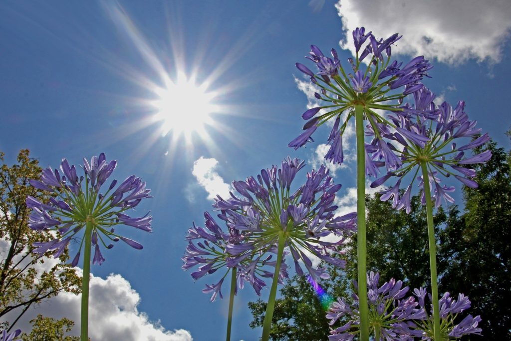 Sun shining on garden flower
