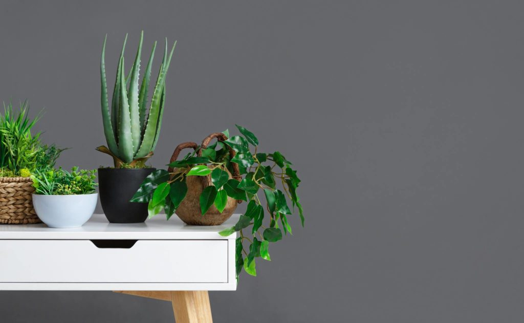 Beautiful plants on a white table and a gray wall