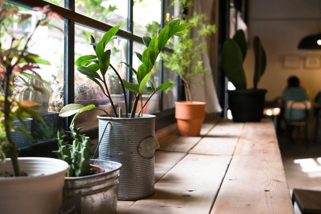 Indoor container garden along a window.