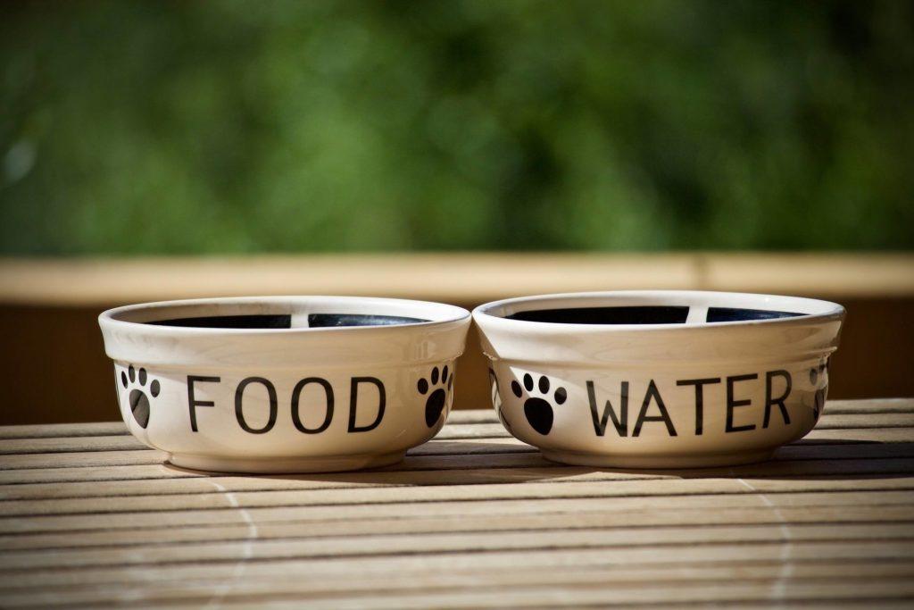 Dog food and water bowls