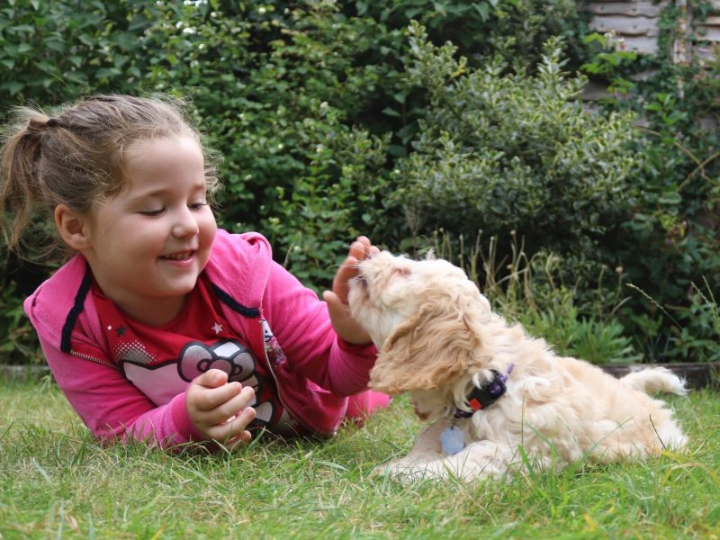 Child playing with a puppy on grass