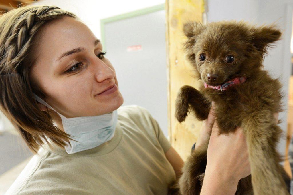 Veterinarian examines a puppy dog