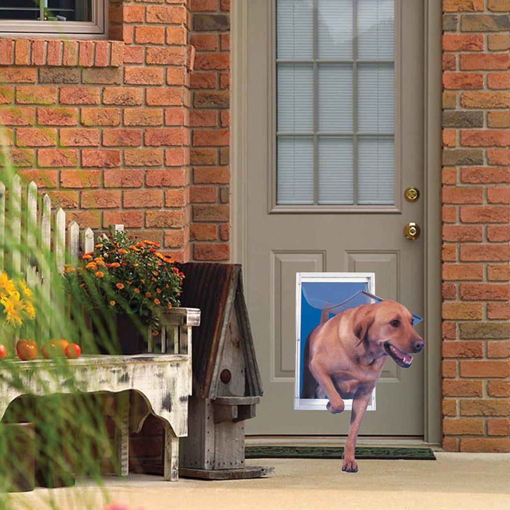 Dog going outside through a pet door