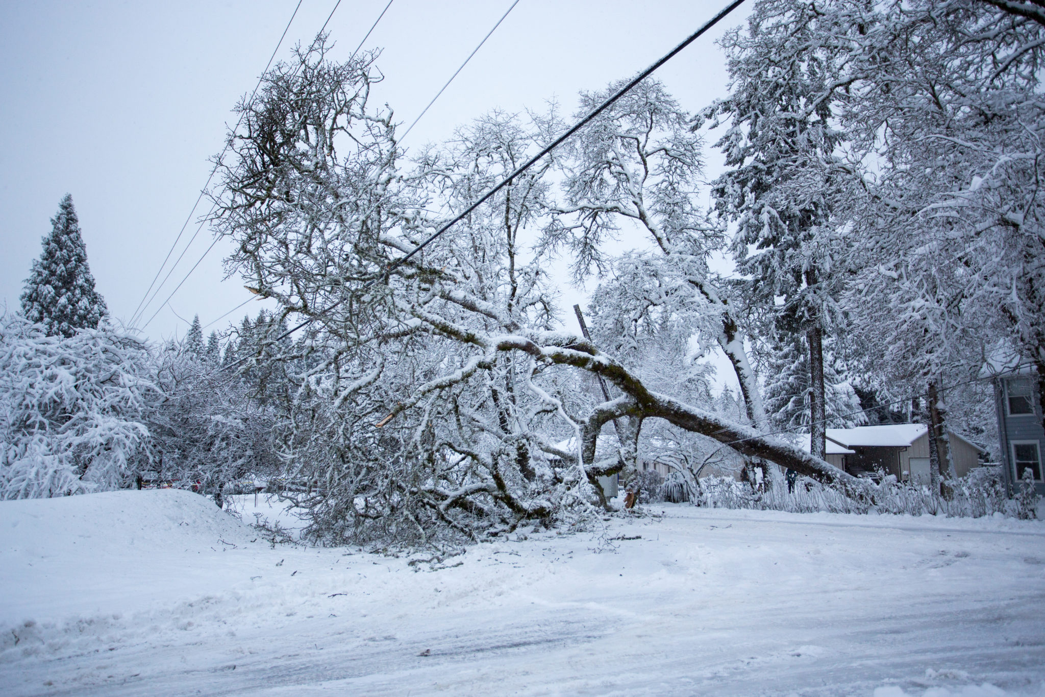 downed tree caused by a winter storm