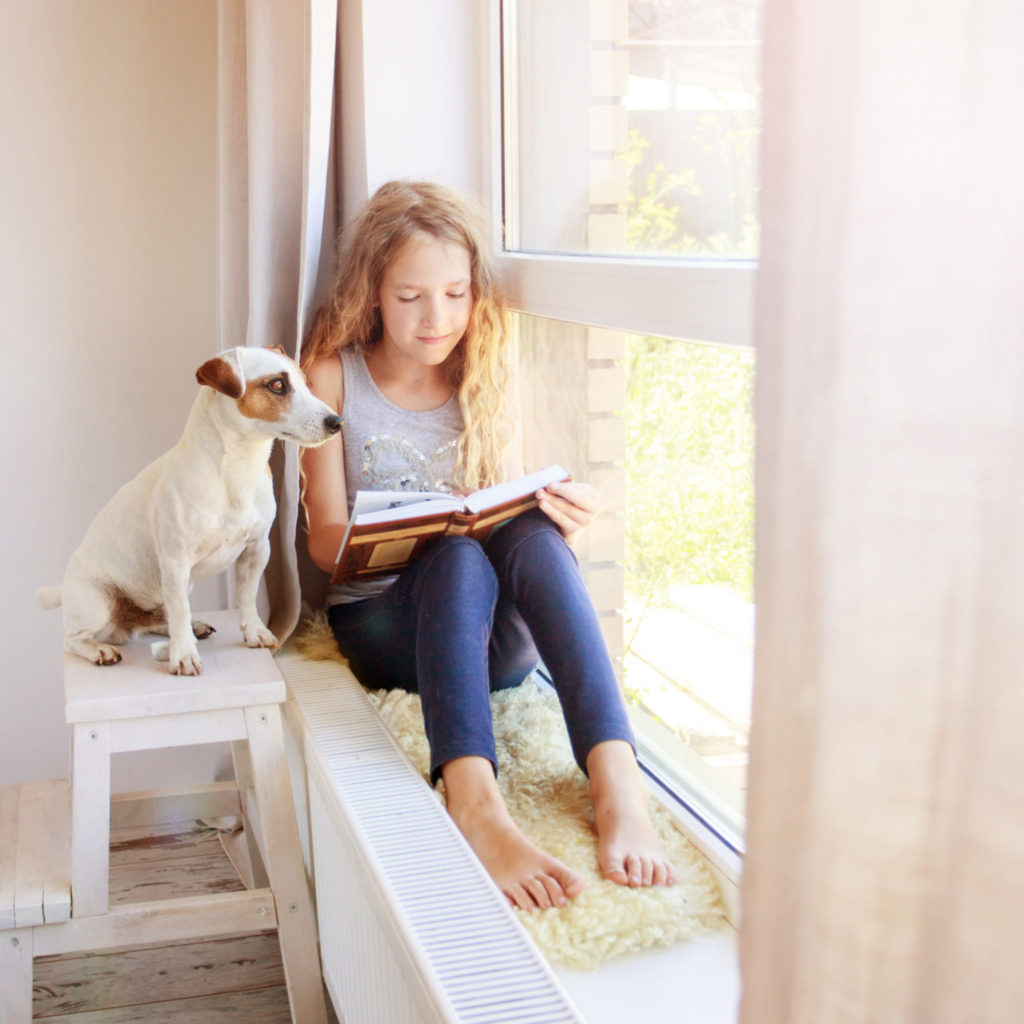 Dog window bench