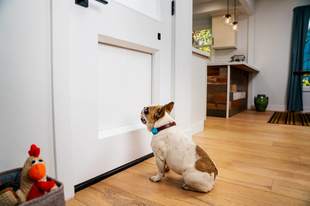 Dog waiting for MyQ Pet Portal to Open