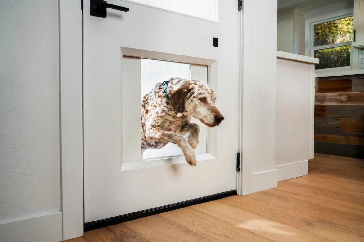 Dog jumping through the MyQ Pet Portal pet door.