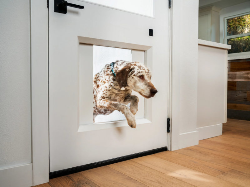 Dog jumping through the MyQ Pet Portal pet door.