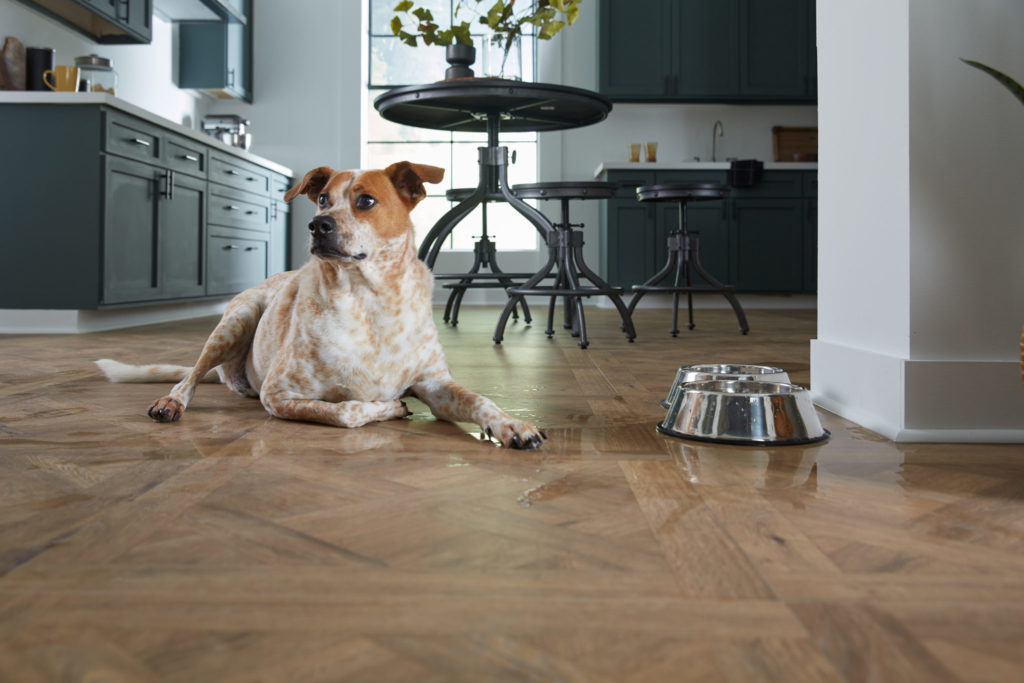 Dog on LL Flooring AquaSeal Draper Parquet 24 Hour Water-Resistant Laminate